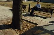 Antonio Mateos, of Lawrence, rests on a bench in downtown Lawrence next to a tree surrounded by bricks that create a planter. Lawrence Parks and Recreation crews employ special measures to care for downtown trees, many of which grow in concrete planters and, soon, metal tree grates.