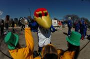 Kansas University's Baby Jay slaps hands with St. Patrick's Day Paradegoers in downtown Chicago, as the Kansas Spirit Squad paraded down Columbus Drive Saturday. KU meets Kentucky today in the second round of the NCAA Tournament.