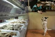 Cloie Harnois, a worker at the Polka Dog Bakery in Boston, holds out a treat for Paco, an 8-year-old Jack Russell-Chihuahua mix, in front of the store's dog treat display. The boutique dog bakery sells organic doggy treats as well as dried grains, herbs, and vegetables for dog owners to blend with the raw meat of their choice.