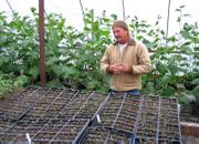 Linwood farmer Kevin Irick knows what his customers at the Farmers Market want: tomatoes. Inside his greenhouse, the plants have been spared the recent cold weather.