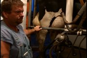 Eugene George prepares to milk his 140 Holstein dairy cows at 4 a.m. on his farm near Baldwin City. He will milk them again in the afternoon.