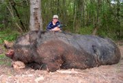 Jamison Stone, 11, poses with a wild pig he killed near Delta, Ala., May 3. Stone's father says the hog weighed a staggering 1,051 pounds and measured 9-feet-4 from the tip of its snout to the base of its tail. If claims of the animal's size are true, it would be larger than ``Hogzilla,'' the huge hog killed in Georgia in 2004.