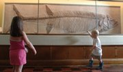 Mike Yoder/Journal-World Photo.Sophia Ralston, 5, left and Ben Bogart, 3, both of Shawnee, view the Xiphactinus molossus fossil exhibit at KU's Natural History Museum.