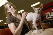 Colrilee Boer, of Alvord, Iowa, pets her white odd-eyed sphynx cat named Russian Nemo of Angelic at the Kansas City Midwest Cat Club's International Championship and Household Pet Cat Show at the Douglas County 4-H Fairgrounds. Hundreds of felines and their owners from across the Midwest converged on the fairgrounds Saturday for the annual cat showing and judging.