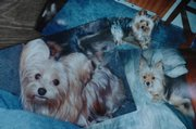 Pictures of Keri Collins' three dogs recently lost because of contaminated food.