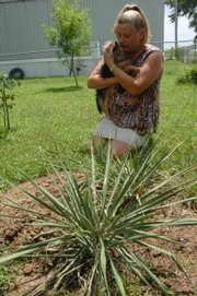 Keri Collins thinks she's lost three dogs this year to the contaminated dog food scare. She has buried the dogs, seen in the photo at top, beneath a yucca plant in her yard. She's shown here holding a brother of the three.
