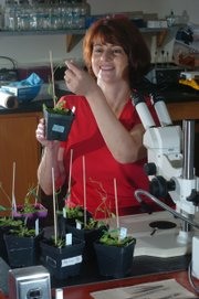 Joy Ward researches how global warming will affect plant life in the years to come. Ward is an assistant professor of plant physiological ecology and plant genomics at Kansas University.