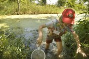 Ian Pultz-Earle traipses through water at the Baker Wetlands in search of insect larvae, spiders and duck weed. Children ages 8-11 explored the plants and animals in the wetlands Friday as part of a summer Aquatic Biology Science Camp put on by the Kansas University Natural History Museum.