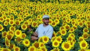 Ted Grinter, who lives near Reno, stands in his field of dreams - 25 acres of sunflowers that he grows for the seeds and for others' enjoyment - in this September 2005 file photo. His property is by U.S. Highway 24-40 between Lawrence and Tonganoxie.