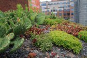 Succulents, including cactus, are generally the plants of choice for green roof projects, like the demonstration garden on the roof of the American Society of Landscape Architects headquarters building in Washington. They can live on existing rainfall, withstand drought, wind and harsh winter conditions.
