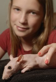 "Lily Allen, 10, Lawrence, is the owner of Vanessa, a hairless rat. Lily got Vanessa in February 2006, before the popular movie ""Ratatouille."" That film and others featuring the rodents in prominent pet roles have stirred up a new respectability for rats among Lawrence pet owners."