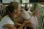 "Courtney Harris, 17, of the Pioneer 4-H Club gives her hog ""Chad"" a kiss Wednesday afternoon.  She and many other 4-H members were preparing to show their animals at the Douglas County Fair."