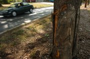 Cars head north on Naismith Dr. Tuesday, August 21, 2007, past the scene of an accident just south of 19th Street Terrace.  A car filled with KU students crashed into the tree in the median.  Two of the students were flown to Kansas City area hospitals.