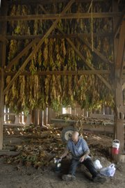 Armando Aguirre sits down to enjoy some lunch in the drying barn among leaves harvested that morning. Growing tobacco is labor-intensive work, requiring about 200 hours per acre from start to finish.