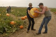 Brothers, from left, Charlie and Michael Davis, both of Lawrence, went to Schaake's Pumpkin Patch east of Lawrence on Tuesday morning to pick a giant pumpkin. As rain started to fall, the pair hurried out of the patch with a pumpkin weighing 98 pounds.