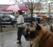Pasha enjoys a high and dry view of passersby in the rain from inside Prairie Pond Studio & Bead Co., 809 Mass.