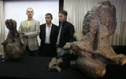 Alexander Kellner, left, a researcher with the Brazilian National Museum, and Argentine paleontologists Jorge Calvo, center, and Juan Porfiri display parts of a skeleton of what could be a new dinosaur species, a 105-foot plant-eater, Futalognkosaurus dukei, during a news conference Monday in Rio de Janeiro.