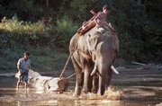An elephant is guided by a mahout as he pulls a teak log across a shallow stream in the jungles of central Myanmar in this Jan. 15, 2001, file photo. Myanmar has become notorious in the region for ignoring international and its own environmental laws in a single-minded effort to make the money that environmentalists say helps keep the regime in power.