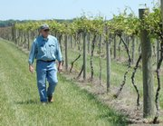The U.S. Supreme Court lifted a ban on interstate wine sales May 16, 2005, but Kansas wineries -- such as Greg Shipe's Davenport Orchard, Vineyard and Winery east of Lawrence -- still can't ship their wines across state lines. Other wine producers hope the ruling spurs discussion of state liquor laws.