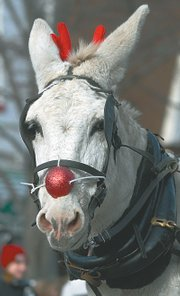A donkey is disguised as a red-nosed reindeer for the 2006 event.