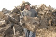 Don Cottrell works on splitting up some seasoned hardwood November, 28, 2007, in north Lawrence.