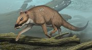 This artist's rendering provided by Northeastern Ohio Universities Colleges of Medicine and Pharmacy shows the 48 million-year--old ungulate Indohyus, from India. Indohyus may be a close relative of whales, and the structure of its bones and chemistry of its teeth indicate that it spent much time in water. In this reconstruction, it is seen diving in a stream, much like the modern African mousedeer does when in danger.
