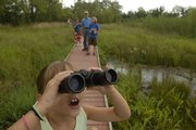 In this photograph by Journal-World Photography Director Thad Allender, compositional interest is created by having a strong foreground subject while filling the middle and background with contributing elements. The subject, Maggie Ziegler, 7, brings a green heron into focus using her binoculars at the Baker Wetlands.