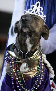 Queen Lucy, a mixed-breed dog, participates in the Krewe of Barkus, a parade for dogs Sunday in New Orleans. The parade was one of many leading up to Mardi Gras on Feb. 5