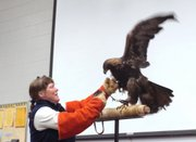 Marty Birrell, director of Prairie Park Nature Center, picks up Lakhota, a golden eagle, while showing it to an audience Sunday during the Jayhawk Audubon Society's Kaw Valley Eagles Day at Free State High School. Birrell said Lakhota came to the center after it was shocked by power lines.