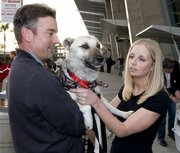 Jeff Forest holds Nubs as Chrissy Sjoberg pets him after the dog arrived Friday at San Diego's Lindbergh Field airport. Nubs was adopted by Marine Maj. Brian Dennis, who befriended the dog in Iraq.