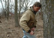 Bob Lominska has tapped into several silver maple trees on his property to get maple syrup. After drilling into his trees and hanging buckets, Lominska has collected around 5 gallons of raw sap so far this season.