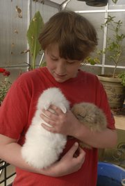 Andrew Krejci, 10, holds one of the many rabbits his mother raises on the family farm north of Lawrence.