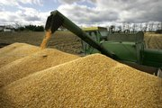 Dale Rossman empties a load of corn into a truck from his combine while harvesting corn  Oct. 28, 2007, on his farm in Spring Mills, Pa. How farmers choose to use their land this year is the focus of the planting report due Monday from the U.S. Department of Agriculture.