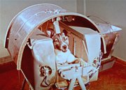 A view of Laika, Nov. 3, 1957, the female dog that Russian officials say is riding into outer space as a passenger aboard Sputnik II. Russian officials on Friday unveiled a monument to Laika, a mongrel dog whose flight to space more than 50 years ago paved the way for human space missions.