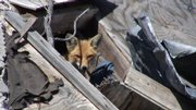 A fox makes his home in a pile of rubble on what was once Main Street in downtown Greensburg. Although the fox has a place to call home, many Greensburg residents are still living in temporary housing trailers provided by the Federal Emergency Management Agency.