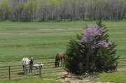 Chris Edmonds greets some of her family's horses in the pasture below their home, located northwest of Clinton Lake.