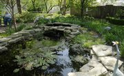 A pond is the focal point for Carolyn Thomson's backyard. The retiree, shown in background, has built a garden oasis on her property near Hillcrest School.