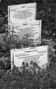 Signs identify the plants in the bible garden next to the First Congregational Church in Fair Haven, Vt. The Rev. Marsh Hudson-Knapp helped establish the garden a quarter-century ago.