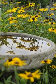 Debby Hird mixes native grasses and flowers into her landscaping.