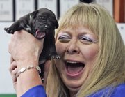 "American Bernann McKinney holds one of five cloned pit bull puppies during her first meeting with them Tuesday at the Seoul National University Hospital for Animals in Seoul, South Korea. McKinney has received five puppies - copies of her beloved late pit bull ""Booger""- from a South Korean biotech firm that specializes in cloning canines."