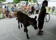 "Nikki-Lee Aguilar, 12, Lecompton, leads her calf around an arena in the ""Most Unusual Pet"" contest Saturday at the 101st annual Vinland Fair. Children competed in the pet parade on the fair&squot;s final day."