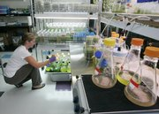 Charity DeLuca, Vice president of Research Relations at LiveFuels in San Carlos, Calif., works with different algae samples in July. Behind the scenes, the airline industry is aggressively pushing for homegrown alternatives to petroleum-based jet fuel. A coalition that includes the Federal Aviation Administration and airline, manufacturing and airport associations wants standards for a 50 percent synthetic jet fuel approved by the end of this year..