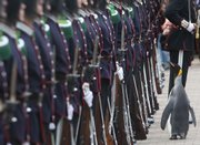 Nils Olav, an Edinburgh Zoo penguin and Colonel-in-Chief of the Norwegian King's Guard, inspects soldiers of his regiment in Edinburgh, Scotland. He received a medal and a title Friday.