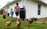 Kim Bellemere and her two sons, Andy, 3, left, and Jack, 5, round up a few chickens and a rooster Thursday at their home north of Lawrence. Bellemere is organizing a Lawrence eco-parenting group for families interested in incorporating environmentally friendly practices into their lives.