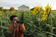 Sangeet Mehta, Kansas City, Mo., frames a photo of a sunflower northeast of Lawrence on Sunday. The state's official flower is in full bloom at Ted Grinter's farm near Stillwell Road and 246th Street in Leavenworth County.  Mehta, an IT specialist originally from New Delhi, India, photographed the towering stalks around sunset.