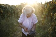 During the Missouri Photo Workshop, John Henry spent a week photographing the end of a family vineyard in St. James, Mo. Photographers at most any stage can learn something or gain inspiration from any number of workshops. The MPW's focus was documentary photography. Here, Angie Jones picks grapes in the final days of her vineyard.