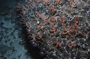 Millions of brittle stars off the coast of New Zealand are among the discoveries made by scientists compiling a marine census.