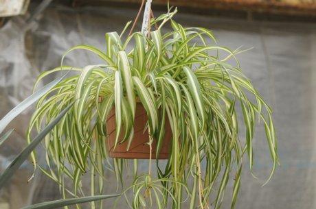 Low-maintenance indoor plants / LJWorld.com