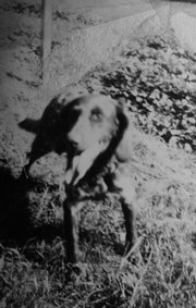This dog, a mixed breed named Waldmann, was brought back into the United States after World War II when his owner, Lincoln Johnson, of Lawrence, hid him in a duffel bag.