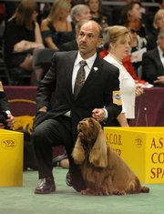 Handler Scott Sommer and his Sussex spaniel Stump wait for their turn in the ring during the Sporting Group competition, which Stump won, during the 133rd annual Westminster Kennel Club Dog Show on Tuesday in New York. Stump was named best in show.